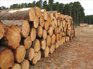 UK Sawmills